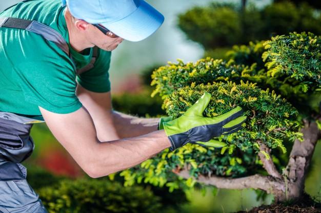 Landscaping & Gardening | الحدائق و التشجير